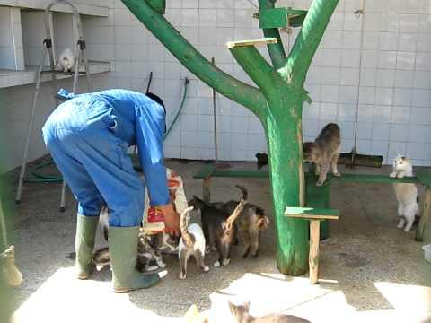 LA SPANA Maroc - Nous ne tuons pas les animaux et chaque année on stérilise 1000 chiens et chats et on met 2000 à l'adoption, mais nous avons besoins  de plus de dons pour les sauver…
