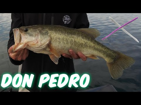 Lake Don Pedro Bass Fishing.(Fall Tips & Tricks)