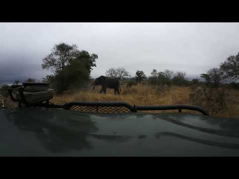 360 degree - Sabi Sand game drive, elephants