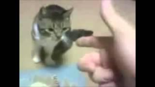 animales jugando al muerto
