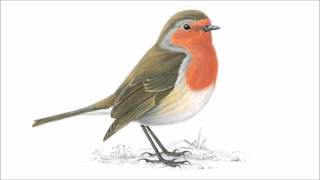 Robin and the Backstabbers - Noi toți @ Radio România Actualități