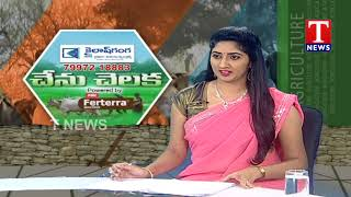 Chenu Chelaka | Family Farmer Concept by Ravinder Reddy  Telugu