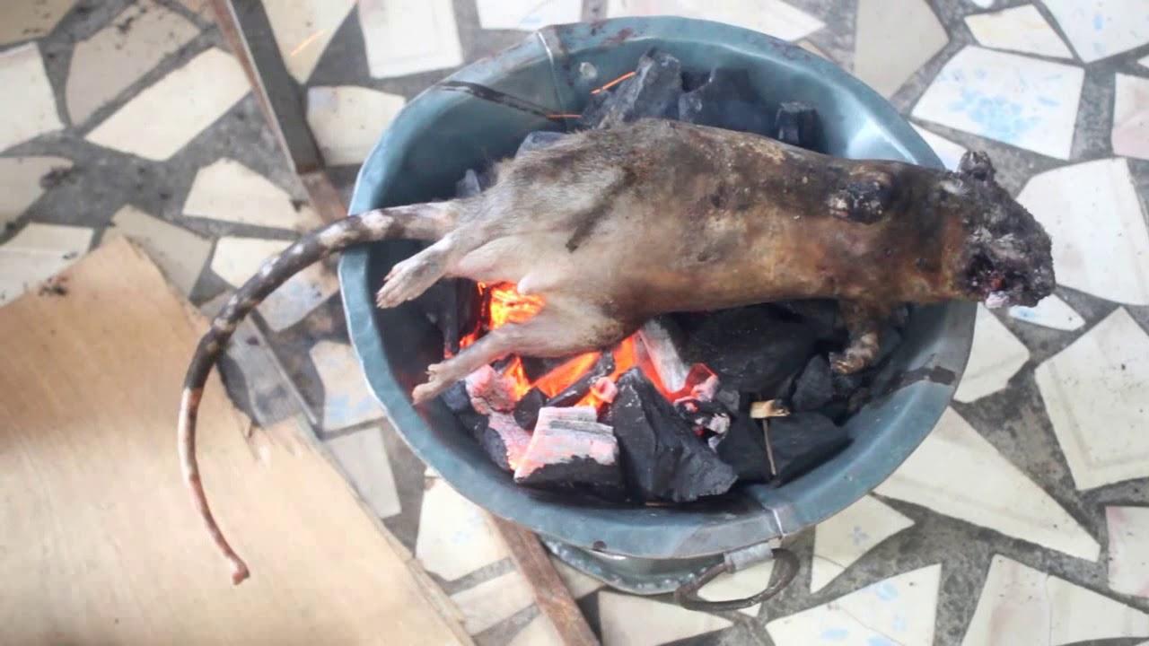 """""""Ẩm Thực Châu Phi"""" làm và  ăn thịt chuột khổng lồ châu phi"""