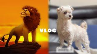 VLOG | 강아지랑 대학생 일상 브이로그. 강아지 산…