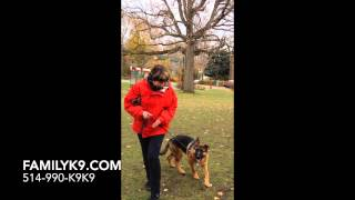 German Shepherd In Training, Montreal - Barbara &  Ikie Heeling