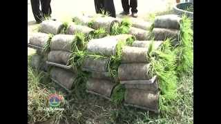 Lao NEWS on LNTV: PM urges technical experts producing new varieties of rice seeds.13/8/2014