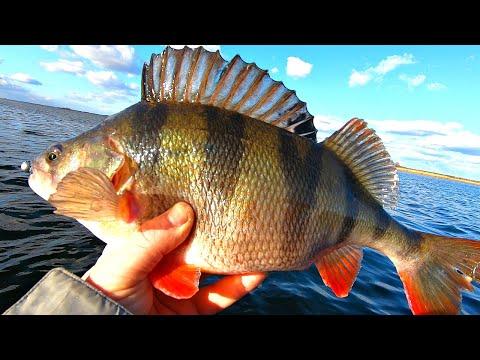КИЛОГРАММОВЫЕ ОКУНИ МОНСТРЫ! Судаки на меляках! Рыбалка мечта! Ловля хищника в феврале 2020