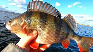 КИЛОГРАММОВЫЕ ОКУНИ МОНСТРЫ Судаки на меляках Рыбалка мечта Ловля хищника в феврале 2020
