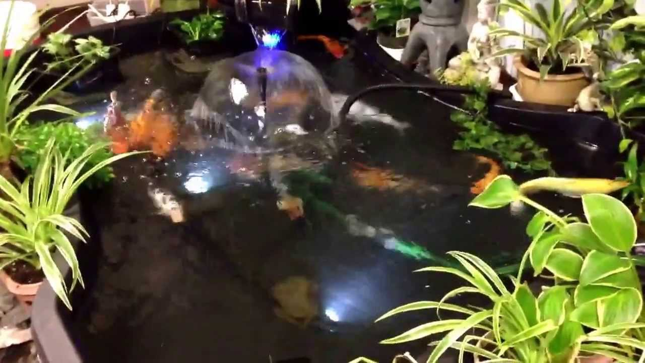 My indoor koi pond youtube for My koi pond