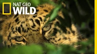 Nat Geo Wild on FREECABLE TV