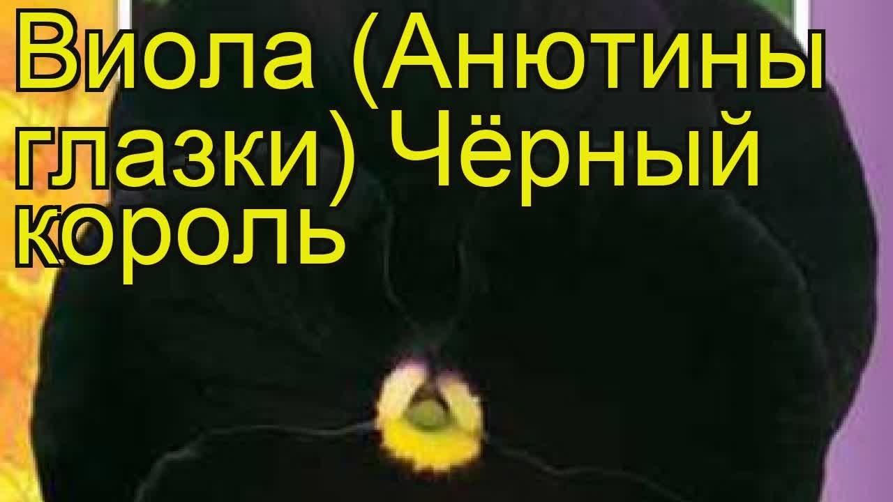 Сбор и обработка зимней крапивы - YouTube