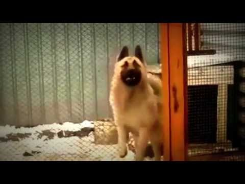"""Dog Dancing - """"MURDER DAT DANCE FLOOR"""""""