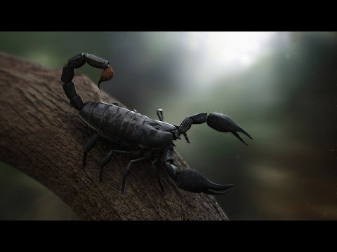 Scorpion Documentary | Scorpions | Types & Species | Nature Film | Scary Scorpions