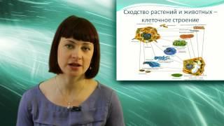 Зоология - наука о животных. Онлайн подготовка к ЕГЭ по Биологии.