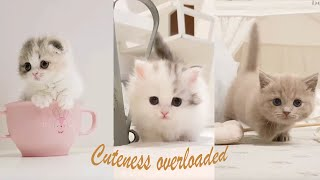 Super cute kittens in the world  cute baby cats | top cute kittens in world 2020 |many cute kittens