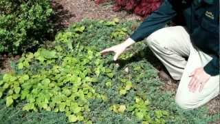 How to Weed Garden Landscape Beds
