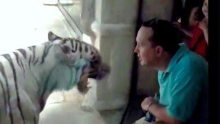 Нападение животных на людей в зоопарке.  / Zoo animal attacks.