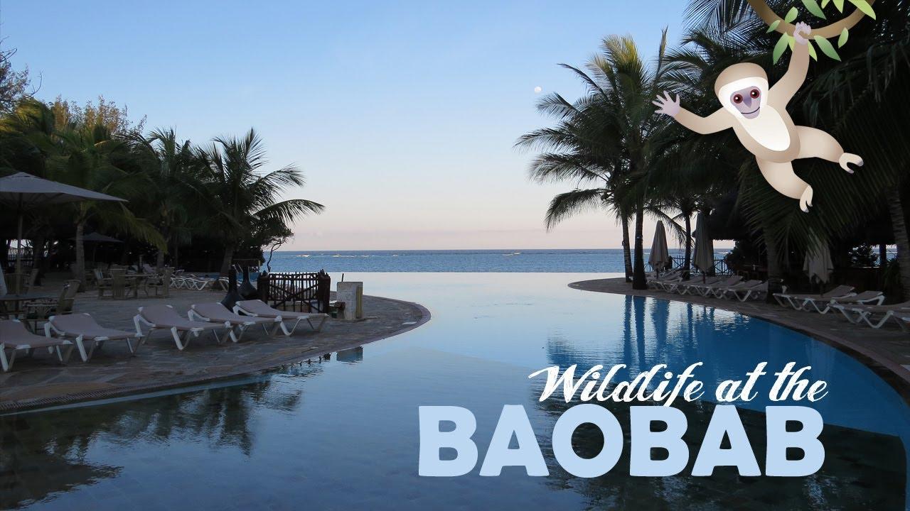 Wildlife At The Baobab Beach Resort Diani Beach Kenya