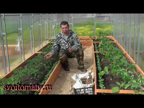 Чем подкормить томаты после высадки в грунт