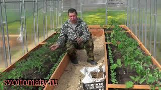 видео Чем подкормить помидоры после высадки в теплицу