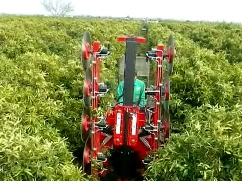 Orchard Pruning Machine /podadora Frutales Doble De Discos.
