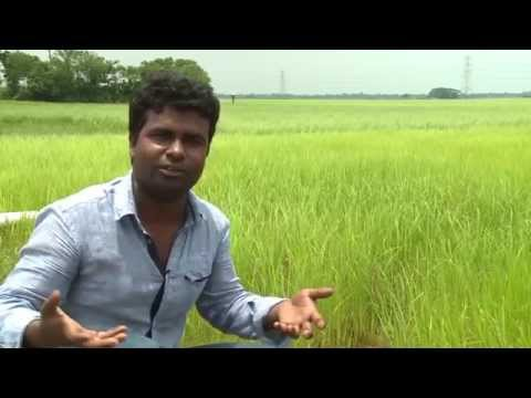 Natural agriculture  Bangladesh HD Media Production