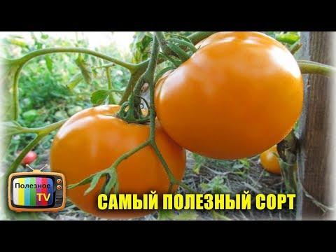 САМЫЙ ПОЛЕЗНЫЙ И УРОЖАЙНЫЙ СОРТ ПОМИДОР ХУРМА | урожайный | урожайные | помидоры | полезное | томатов | томаты | огород | лучшие | сорта | самые