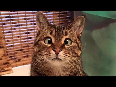 Funny Cat ! Приколы с котами ! Сентябрь 2018. Подборка #2