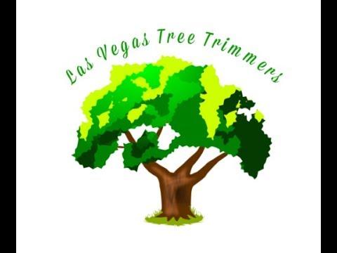 Case Study: Las Vegas Tree Trimmers Vid #1