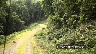 Jeff Norwood - Carolina Land And Timber - Timber Harvesting Process