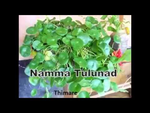 Namma Tulunadu