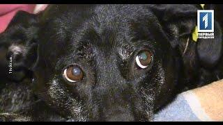 Беременность стерилизованной собаки