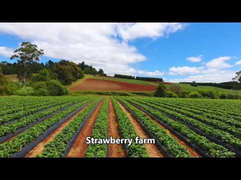 Melbourne - Cherry Farm