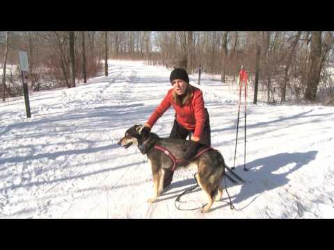 Skijoring In Three Rivers