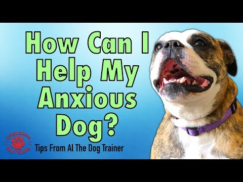 What Can I Do To Help My Anxious Dog? - Separation Anxiety - Tips From Al The Dog Trainer