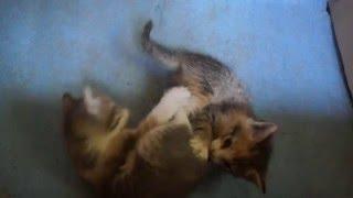 Отдам котенка в хорошие руки, Санкт Петербург, метро Старая Деревня