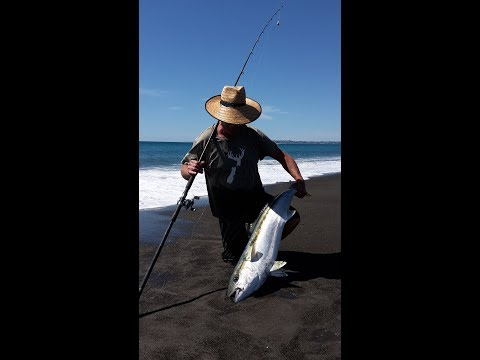 Fishing Napier LBGF Big Kingi; Simple Man 17