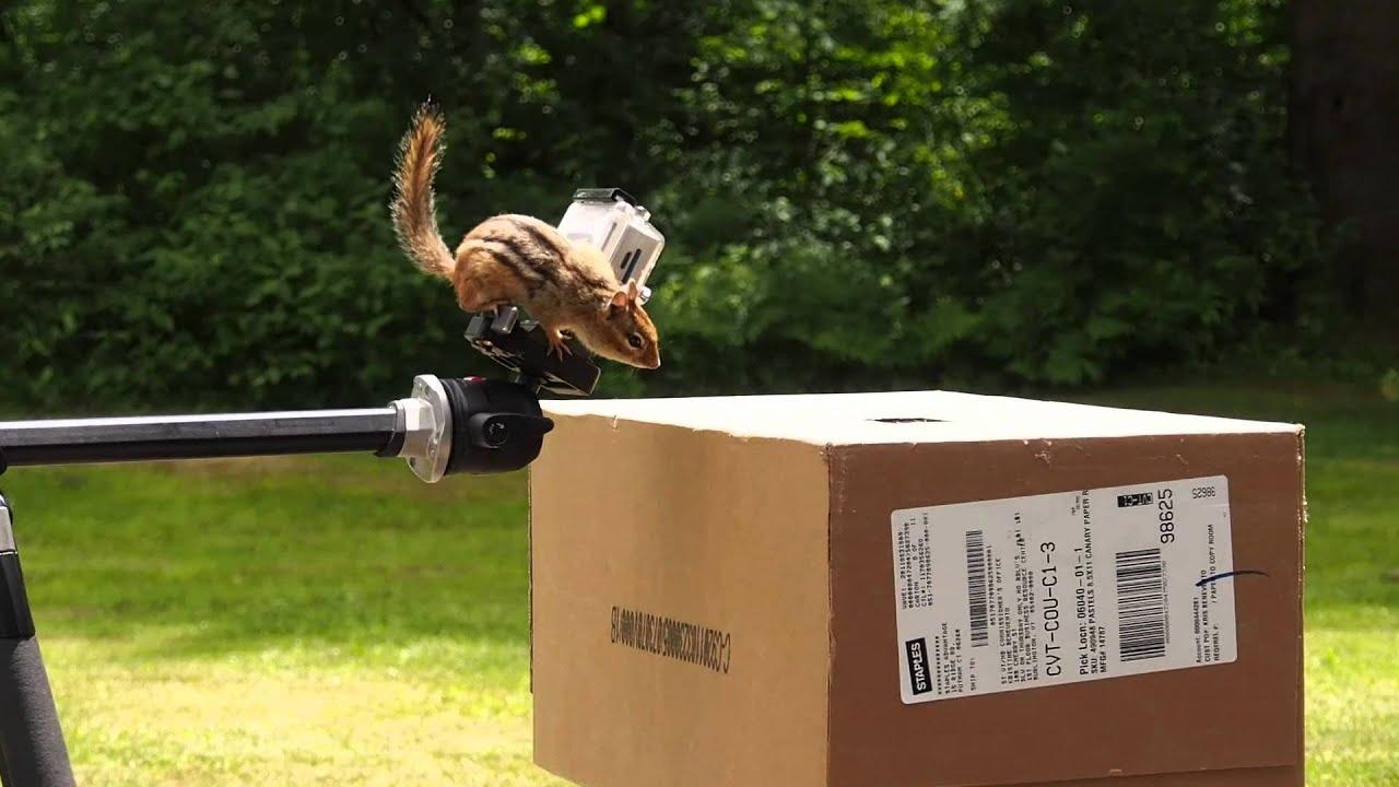 A Better Chipmunk Trap