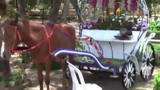 Парк.  Музыка Сергея Чекалина. A park. Music by Sergey Chekalin.