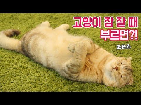 고양이가 잠 잘 때 이름을 불러보았다!?