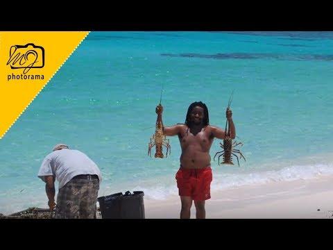 Catching Lobster In Anegada British Virgin Islands | 2010