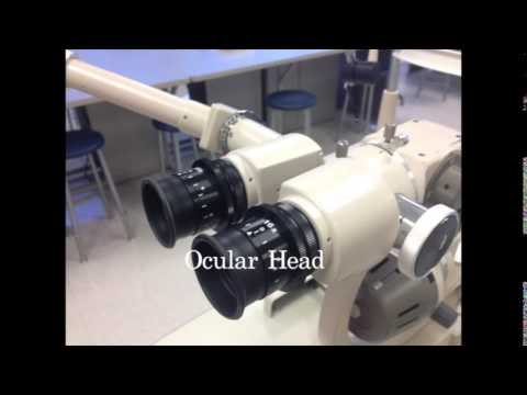 Parts of a slit lamp youtube parts of a slit lamp mozeypictures Gallery