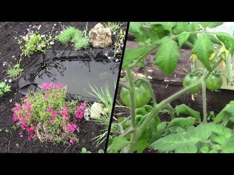 4 сотки, Самодельный ПРУДИК, Помидоры, Цветы, огород в начале июня