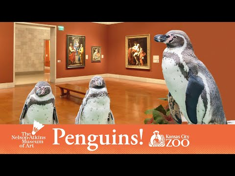 Penguins Visit Nelson-Atkins Ahead of Kansas City Zoo Opening