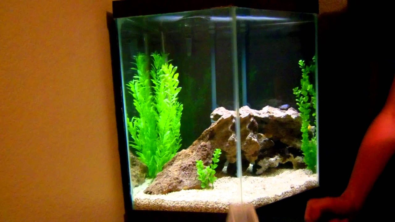 Mixing South American Cichlids With African Cichlids Youtube