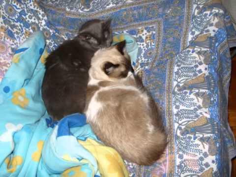 Trailer do filme Noites Felinas
