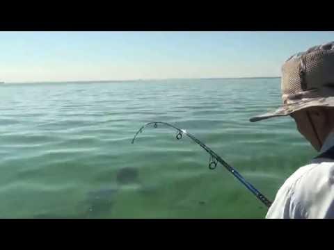 ловля сома на водохранилище с берега