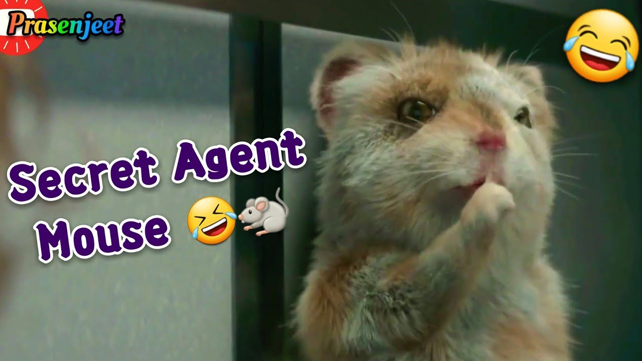 Funny Mouse Secret Agent Whatsapp Status Video By Prasenjeet Meshram