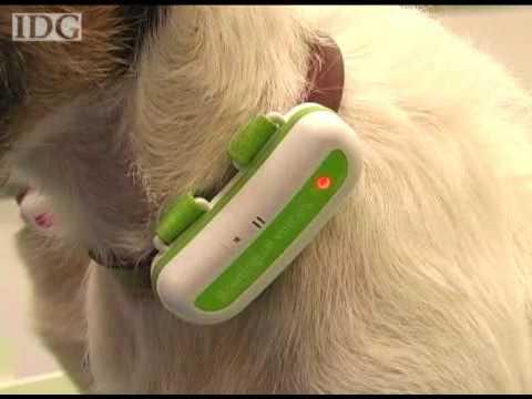 Woof! Dog translator gets upgrade