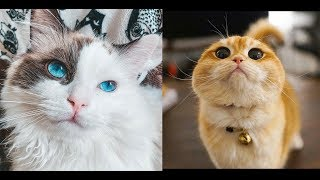 Funny Cats and Kittens Meowing Videos Compilation 2019